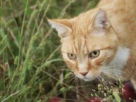 nyfiken katt och vindfall foto
