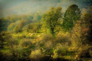 pastoral foto