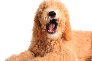 pratande hund foto