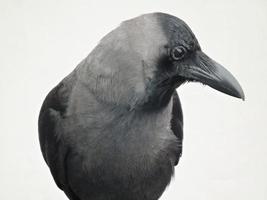 nyfiken fågel foto
