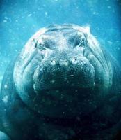 under havet foto