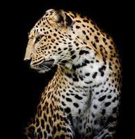sidan av leoparden foto