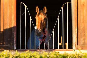 häst tittar genom fönstret