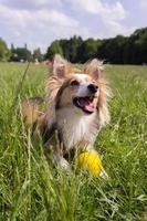 väldigt glad hund med bollen foto