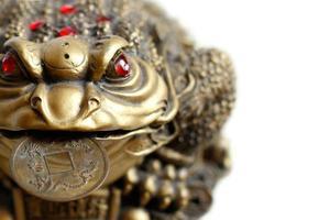 feng shui - groda med mynt foto