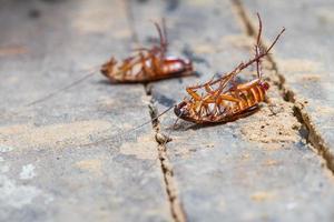 död kackerlacka foto