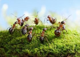 myror, dans av jägare foto