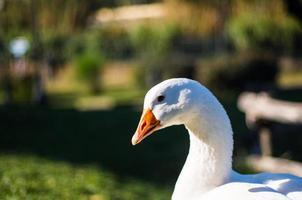 anka profil foto