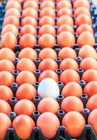 ägg i låda