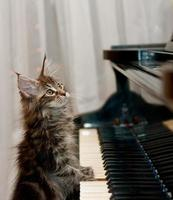 katt som tittar upp med sin tass på ett piano foto