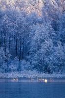 vinterfryst sjö och skog vid soluppgång