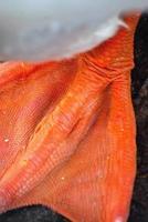 närbild på en orange svans fot