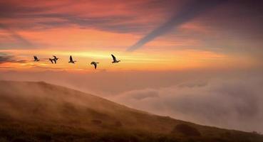 fåglar vid soluppgång eller solnedgång hösten koncept foto
