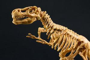 dinosaurie tyrannosaurus t rex skelett på svart bakgrund foto