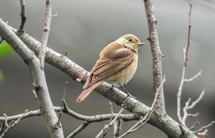 fåglar foto
