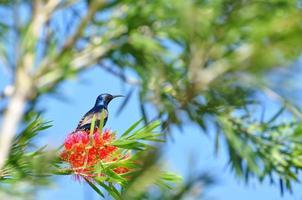 natur brummande fågel foto