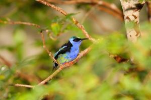 blå fågel på gren foto