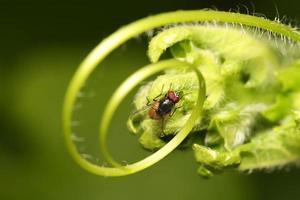 flyga på det gröna bladet foto