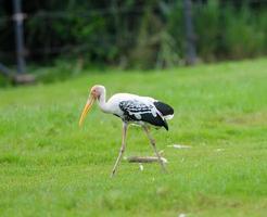målad stork / målad stork foto