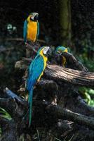 papegoja fågel foto