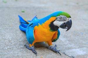 stor papegoja foto
