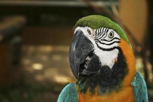 papegoja fåglar foto