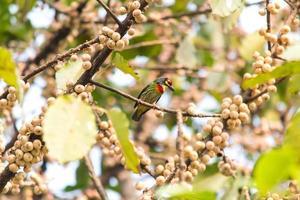 fåglar i parken foto