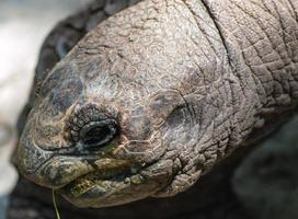 sköldpaddshuvud foto
