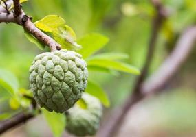 vaniljsås äpple foto