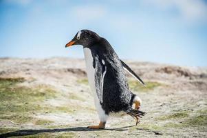 pingviner i antarktis
