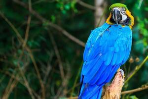 papegoja fågel