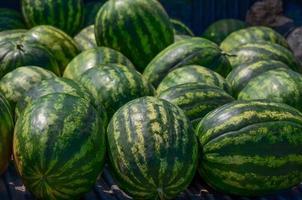 vattenmeloner foto