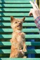 hundträning foto
