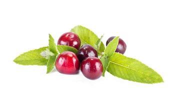 körsbärs- och myntablad