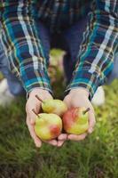 färsk päron