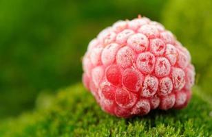 frysta röda hallon på grön moss närbild