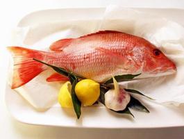 snapper röd fisk isolerad på vit bakgrund foto