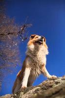 hund på sten foto