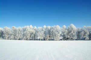 frostade träd foto