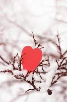 alla hjärtans dag foto