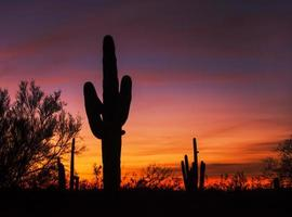 saguaro solnedgång foto