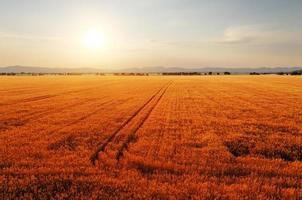 lantligt landskap i gryningen med solen över fälten. foto