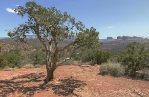 Sedona Valley foto