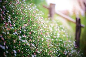 gräs blommor foto
