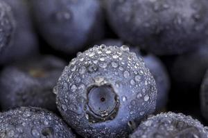 blåbär makro foto