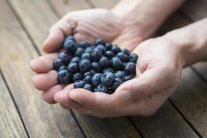 handfull blåbär foto