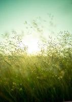 sommar torrt gräs