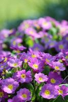 våren vaknar