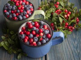 mogna skogsbär - tranbär och blåbär foto