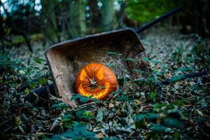 pumpa i skogen foto